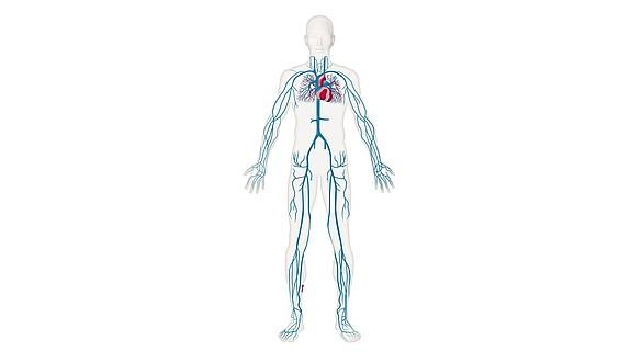 Диагностика и лечение - Диагностика и лечение